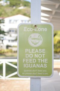 Please Do Not Feed the Iguanas sign at Limetree Beach, St. Thomas